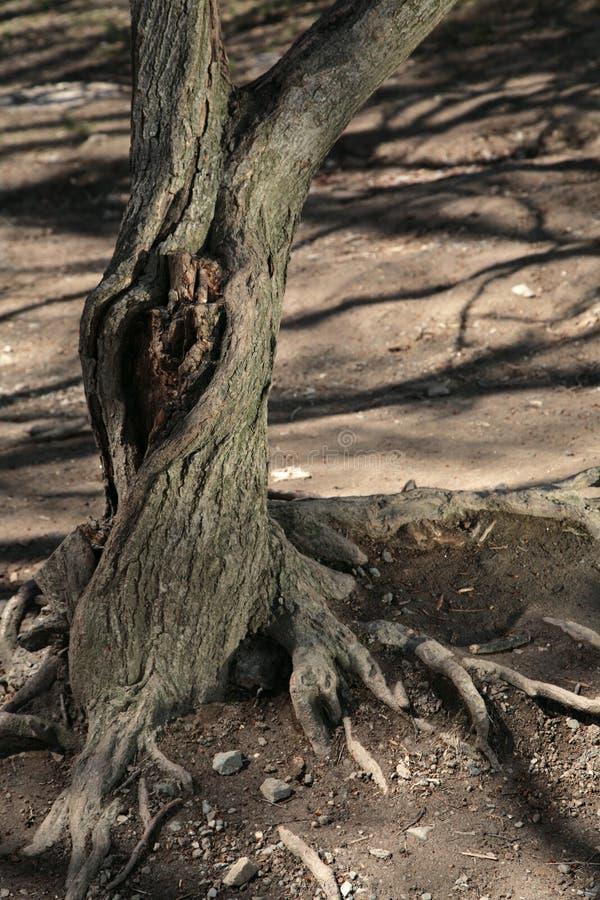 Download Árvore velha com knothole imagem de stock. Imagem de paisagem - 10053281