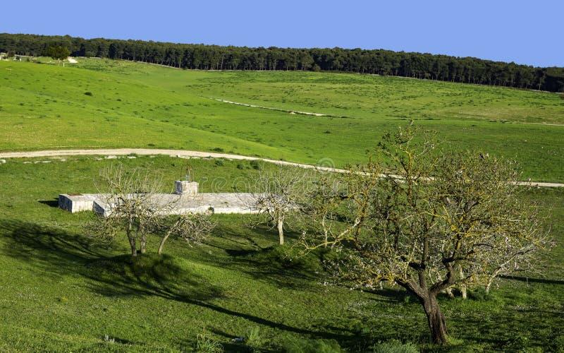 Árvore velha do campo de Murgia da amêndoa imagem de stock