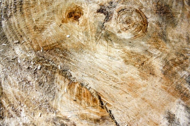 Árvore velha do corte fresco fotos de stock