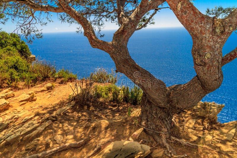 Árvore velha e vista para o mar cénico fotografia de stock royalty free