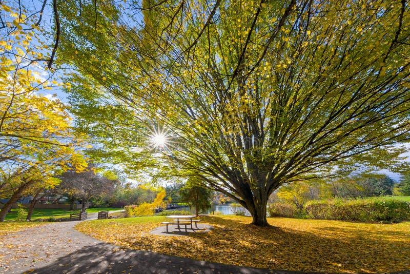 Árvore velha grande no parque do lago commonwealth em Beaverton fotos de stock