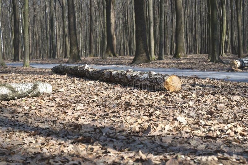 Árvore velha na terra fotos de stock