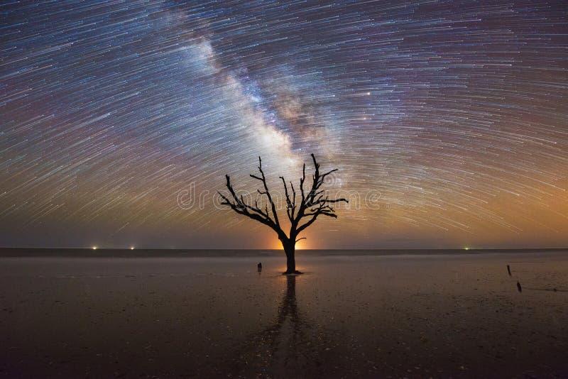 Árvore velha sob o céu noturno foto de stock royalty free