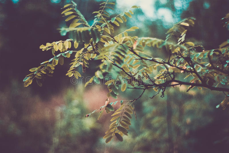 Árvore verde imagem de stock royalty free