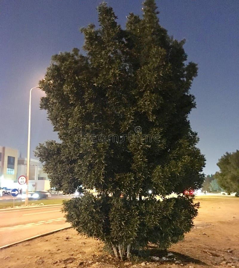 Árvore verde bonita fotos de stock royalty free