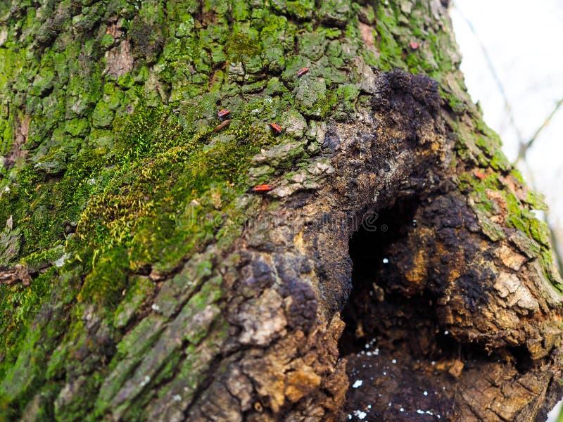 Árvore verde bonita com alguns insetos fotografia de stock