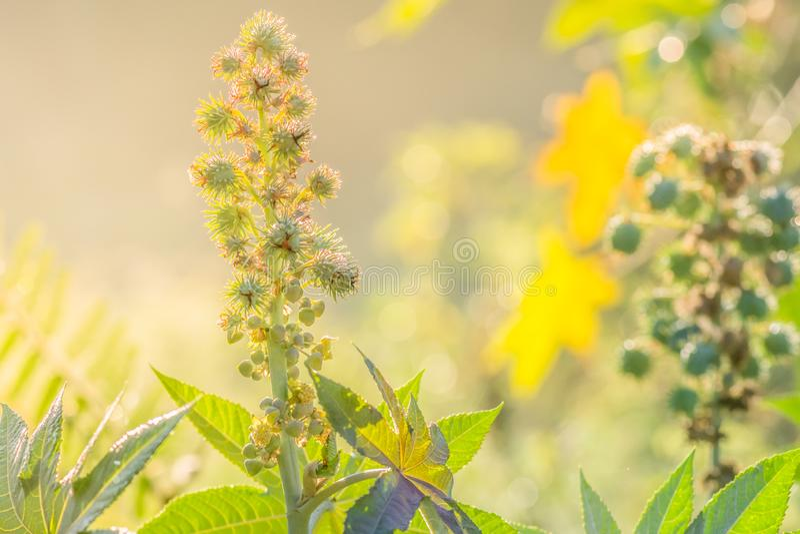 Árvore verde com as flores na luz do sol e na natureza bonita da paisagem fotos de stock royalty free