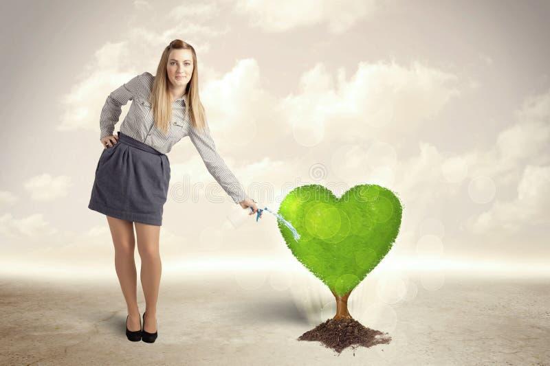 Árvore verde dada forma coração molhando da mulher de negócio fotografia de stock