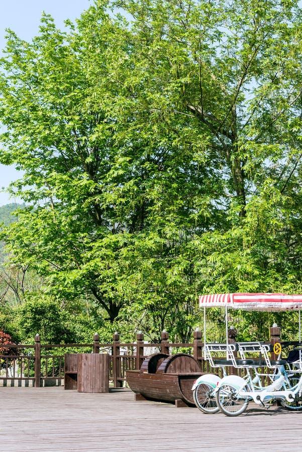 Árvore verde e bicicleta dobro fotos de stock
