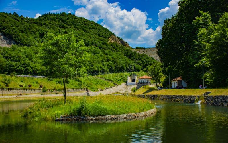 Árvore verde e lago verde fotografia de stock royalty free