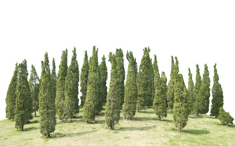 Árvore verde e prado de muitas plantas decorativas do pinho isolados no fundo branco do arquivo com trajeto de grampeamento fotografia de stock royalty free