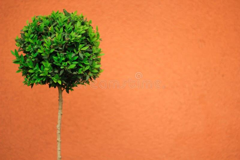 Árvore verde em um fundo alaranjado imagens de stock royalty free