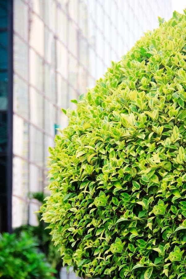 Árvore verde em uma rua na cidade imagens de stock royalty free