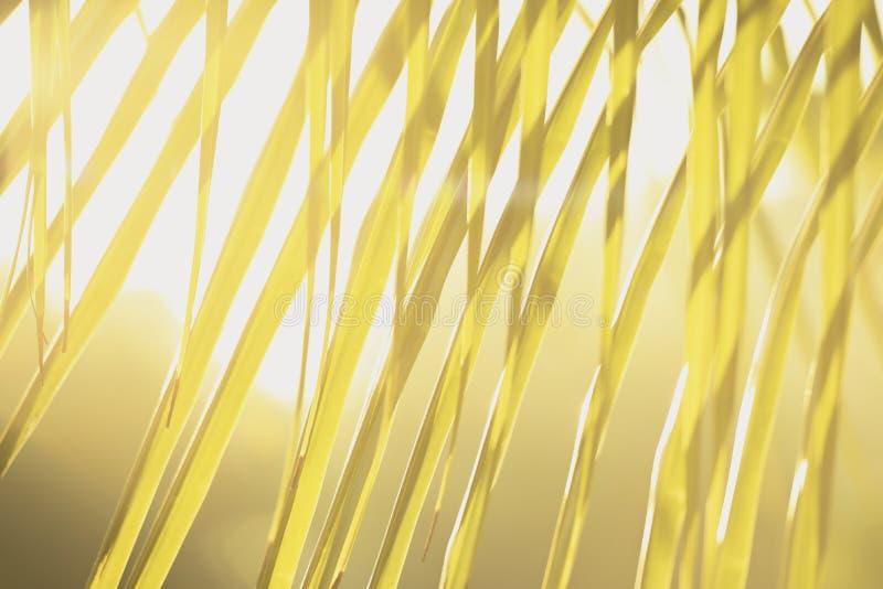 A árvore verde fresca sae com o quadro do fundo natural Cor verde do borrão do sumário para o fundo da natureza, borrada e defocu foto de stock royalty free