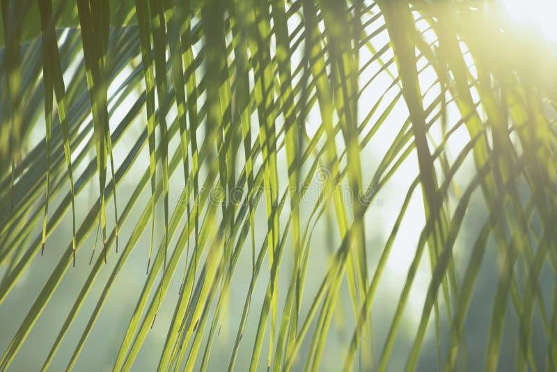 A árvore verde fresca sae com o quadro do fundo natural Cor verde do borrão do sumário para o fundo da natureza, borrada e defocu fotografia de stock royalty free