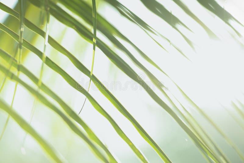 A árvore verde fresca sae com o quadro do fundo natural Cor verde do borrão do sumário para o fundo da natureza, borrada e defocu imagem de stock