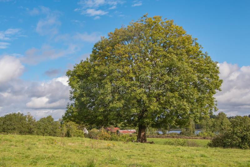 árvore verde grande e céu azul imagens de stock royalty free