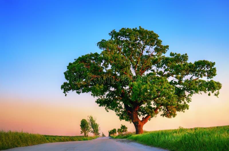 Download Árvore do por do sol imagem de stock. Imagem de haste - 29836837