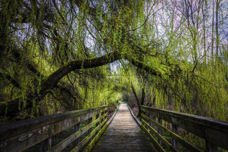 A árvore verde luxúria cobriu o passeio à beira mar imagens de stock royalty free