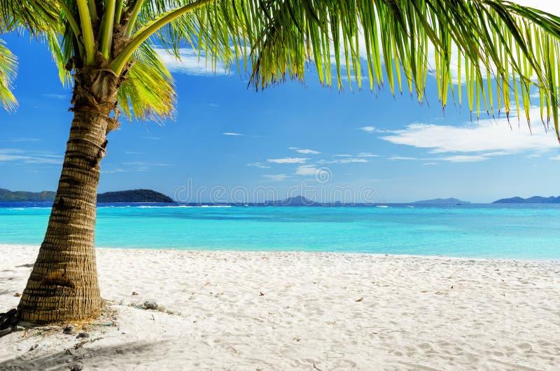 Árvore verde na praia branca da areia fotos de stock