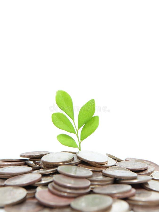 Árvore verde na terra do dinheiro foto de stock