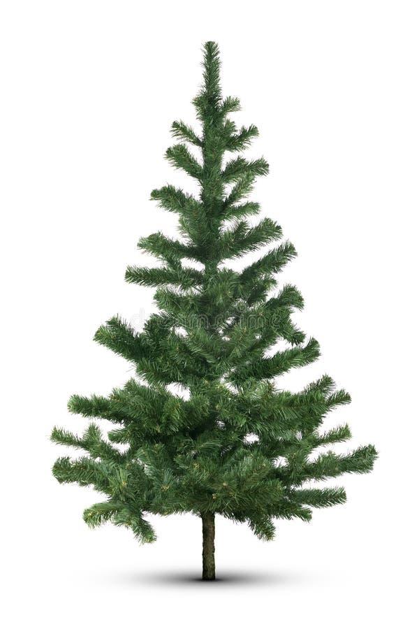 Árvore verde no branco fotos de stock