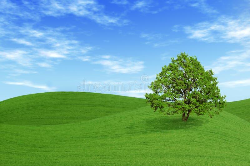 Árvore verde no campo imagens de stock royalty free