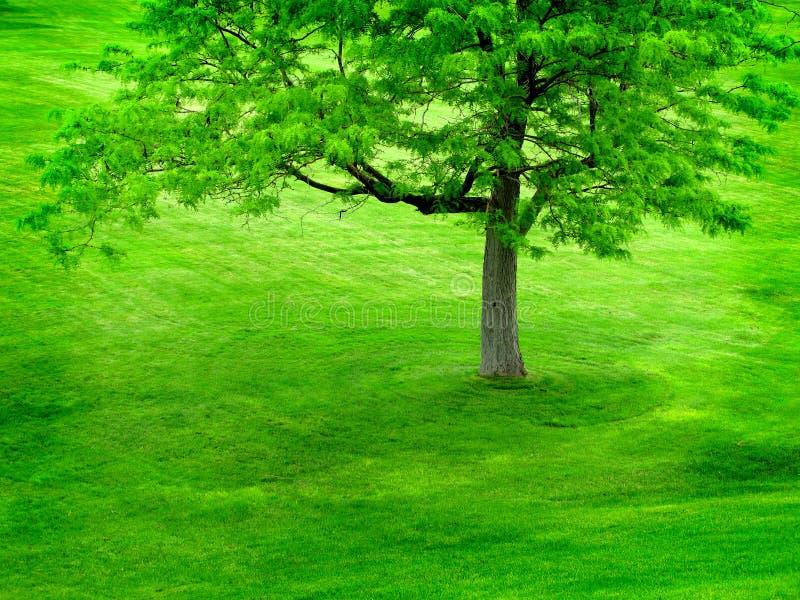Árvore verde no monte verde fotografia de stock royalty free
