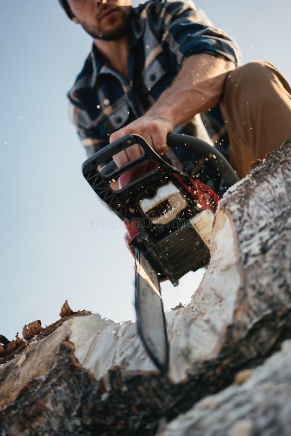 Árvore vestindo do sawing da camisa de manta do lenhador brutal farpado com a serra de cadeia para o trabalho na serração Mosca d fotografia de stock