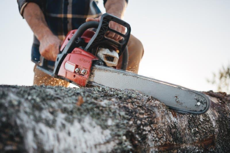 Árvore vestindo do sawing da camisa de manta do lenhador forte farpado com a serra de cadeia para o trabalho na serração foto de stock royalty free