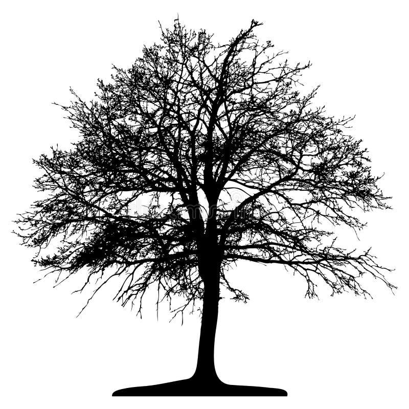 Árvore (vetor) ilustração do vetor