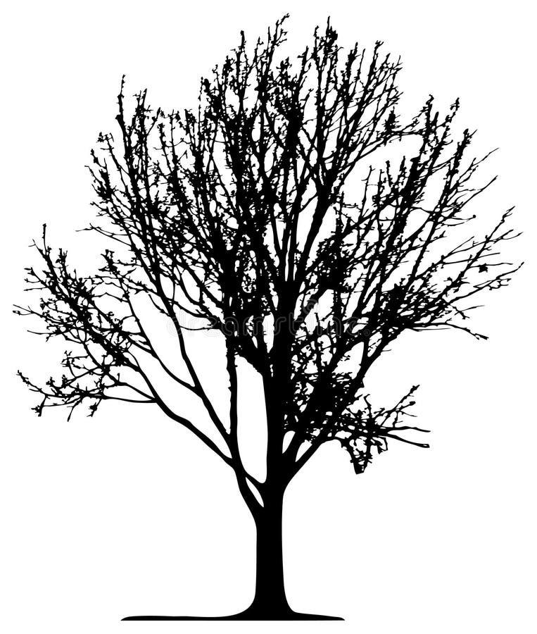 Árvore (vetor) ilustração royalty free