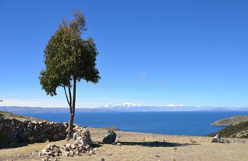 Árvore Vista do lago Titicaca imagens de stock royalty free