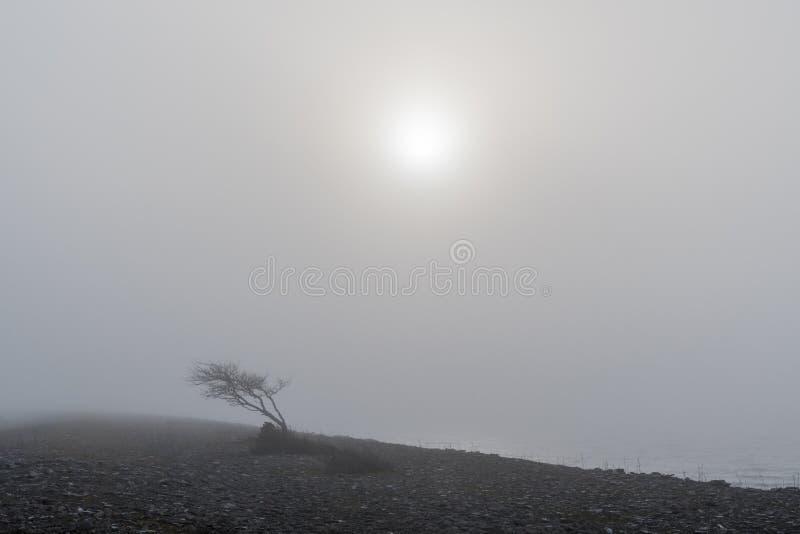 Árvore Windblown na névoa foto de stock royalty free