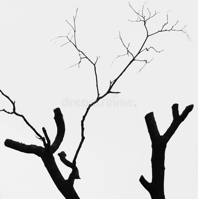 Árvore Withered ilustração stock