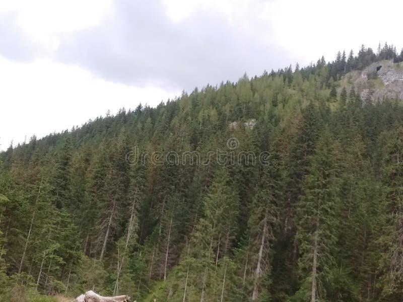 Árvores, árvores e árvores imagem de stock
