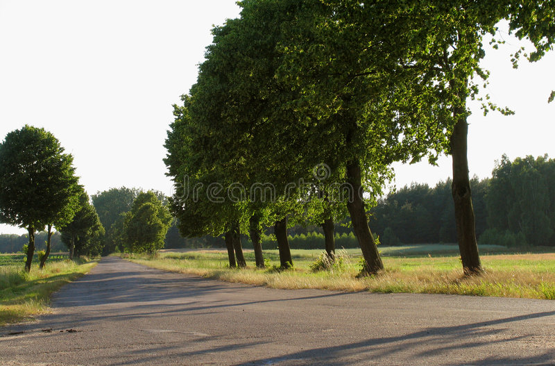 Download Árvores imagem de stock. Imagem de árvores, estrada, sunlight - 536047