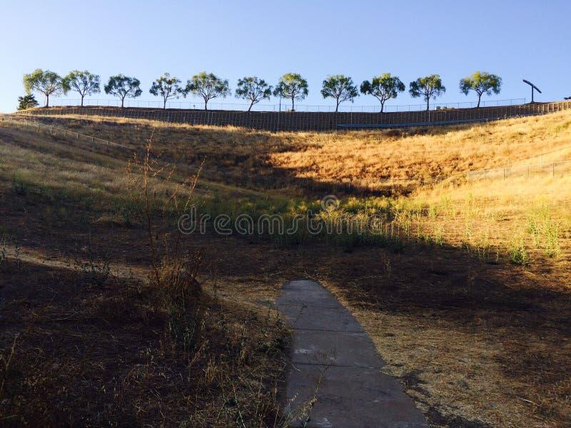11 árvores imagens de stock royalty free