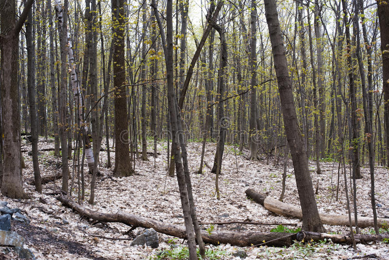 Árvores fotografia de stock