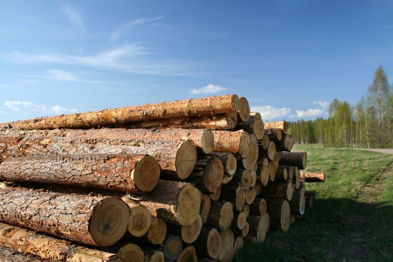 Árvores abatidas fotografia de stock royalty free