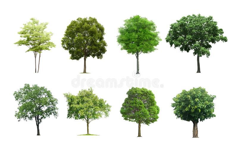 Árvores ajustadas isoladas no fundo branco imagens de stock royalty free