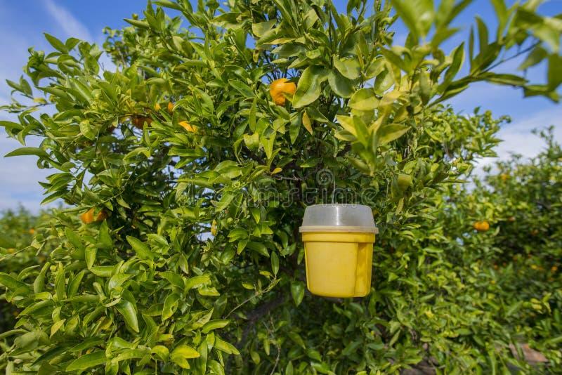 Árvores alaranjadas foto de stock royalty free