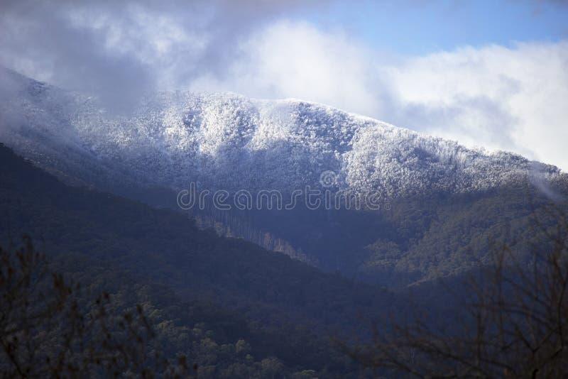 Árvores alinhadas neve na montanha imagem de stock