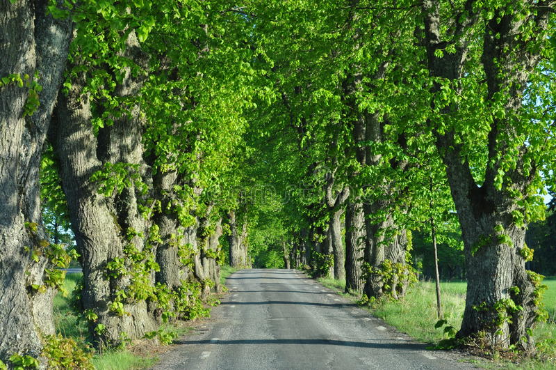Árvores Alle imagem de stock