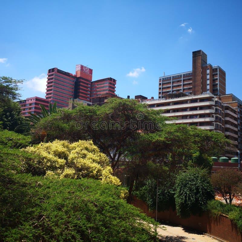 Árvores altas de Joanesburgo África do Sul fotografia de stock