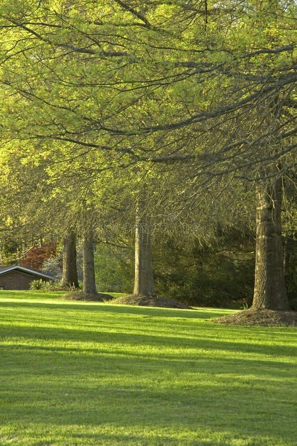 Árvores & luz solar, mola imagens de stock
