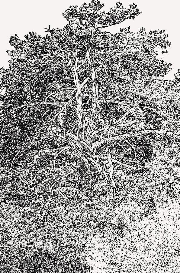 Árvores antigas de tiragem foto de stock royalty free