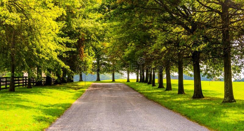 Árvores ao longo de um backroad rural no Condado de York, Pensilvânia foto de stock royalty free