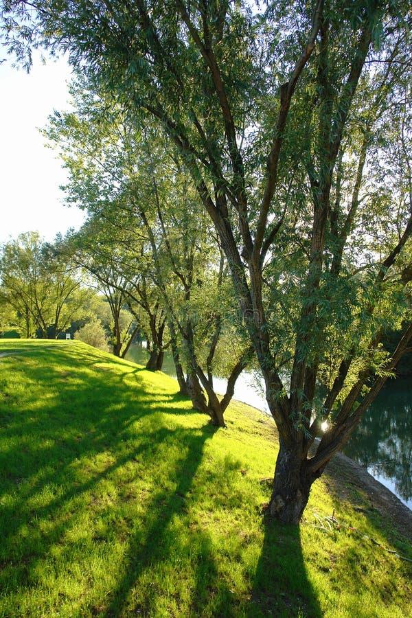 Árvores ao longo do lago Jarun imagens de stock