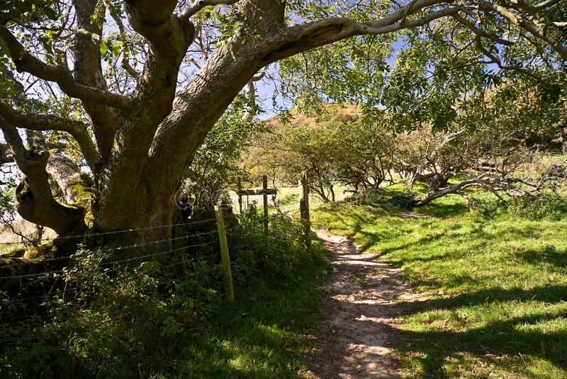 Árvores ao longo do trajeto sul da costa oeste em Dorset, Reino Unido imagem de stock